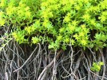 Blumen, Blätter und Wurzeln Lizenzfreie Stockfotografie