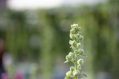 Blumen blühen grün schon auf einem undeutlichen grünen Hintergrund stockfotos