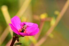 Blumen blühen und die Bienen lizenzfreies stockfoto