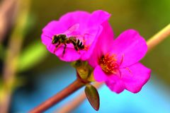 Blumen blühen und die Bienen stockfotografie