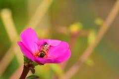 Blumen blühen und die Bienen stockfotos