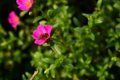 Blumen blühen und die Bienen lizenzfreie stockfotografie