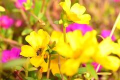 Blumen blühen und die Bienen lizenzfreie stockbilder
