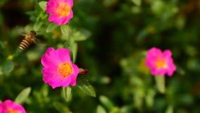 Blumen blühen und die Bienen lizenzfreies stockbild