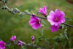 Blumen blühen zu Hause Hinterhofgarten im Frühjahr stockbilder
