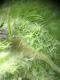 Blumen-Blatt - Zoom 400x zu den Anlagen Stockfotos