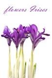 Blumen-Blenden Lizenzfreie Stockbilder
