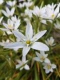 Blumen. Blume Flower Garten Garden stock photo
