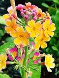 Blumen. Blume Flower Garten Garden royalty free stock photos
