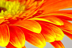 Blumen-Blumenblätter Lizenzfreie Stockbilder
