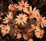 Blumen-Blumenstrauß Stockbild