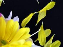 Blumen-Blumenstrauß mit den gefallenen Blumenblättern Lizenzfreies Stockbild