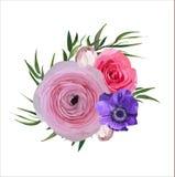 Blumen-Blumenweinlese-Rosa-Garten-Rose Ranunculus Flowers-Knopf Stockfoto