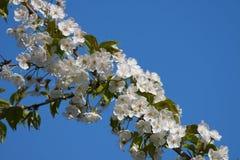 Blumen in Botanik-Garten Lizenzfreies Stockfoto