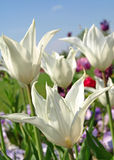 Blumen am BUGA Lizenzfreies Stockbild