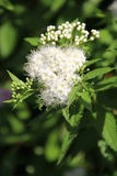 Blumen in Bulgarien, Jahr 2014 Lizenzfreies Stockbild