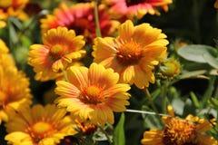 Blumen in Bulgarien, Jahr 2014 Stockbilder