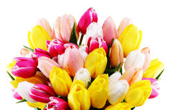 Blumen bunt lizenzfreie stockbilder