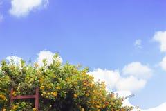 Blumen Bush, blauer Himmel, HDR Lizenzfreie Stockfotos