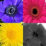 Blumen in CMYK-Farben Stockbilder