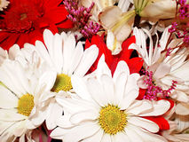 Blumen-Collage Stockfotos
