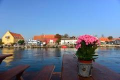 Blumen in Dänemark Stockfotos