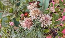 Blumen, das blüht lizenzfreie stockfotografie
