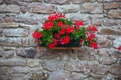 Blumen-Dekoration Lizenzfreie Stockbilder