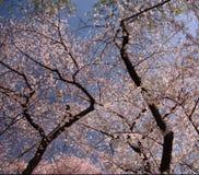 Blumen in den Bäumen Stockfotografie