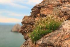 Blumen in den Bergen Stockbilder