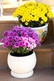 Blumen in den Blumentöpfen Stockfoto