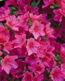 Blumen in den Butchart Gärten Lizenzfreie Stockbilder