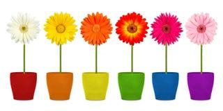 Blumen in den coloful Töpfen Lizenzfreie Stockfotografie