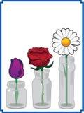Blumen in den Glasgläsern Stockfotografie