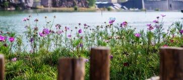Blumen in den Gruppen Stockfoto