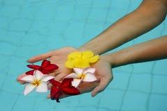 Blumen in den Händen Stockfoto