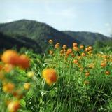 Blumen in den hohen Bergen lizenzfreie stockfotos