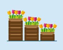Blumen in den Kästen Lizenzfreies Stockfoto