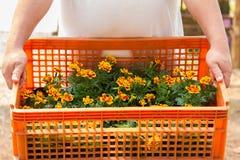 Blumen in den Kisten Lizenzfreie Stockbilder