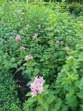 Blumen in den Parks Thailand Stockfotos