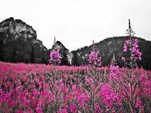 Blumen in den polnischen Tatra-Bergen Stockfotos
