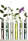 Blumen in den Reagenzgläsern Stockbild