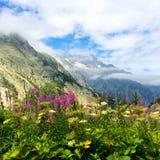 Blumen in den Schweizer Alpen lizenzfreie stockbilder