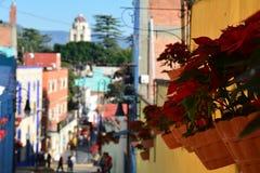 Blumen in den Straßen von Atlixco-Pueblo Magico stockbild