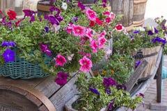 Blumen in den Wannen auf einem alten Warenkorb Stockfotos