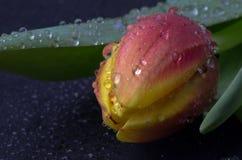 Blumen in den Wassertröpfchen Stockbilder