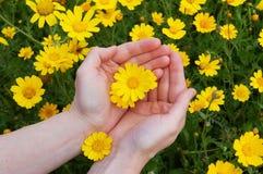 Blumen in den womans Händen Stockfoto