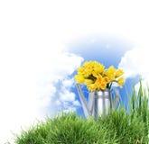 Blumen in der Bewässerungsdose Lizenzfreie Stockfotografie