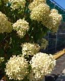 Blumen in der Blüte lizenzfreie stockfotografie