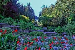 Blumen in der Blüte Lizenzfreies Stockfoto